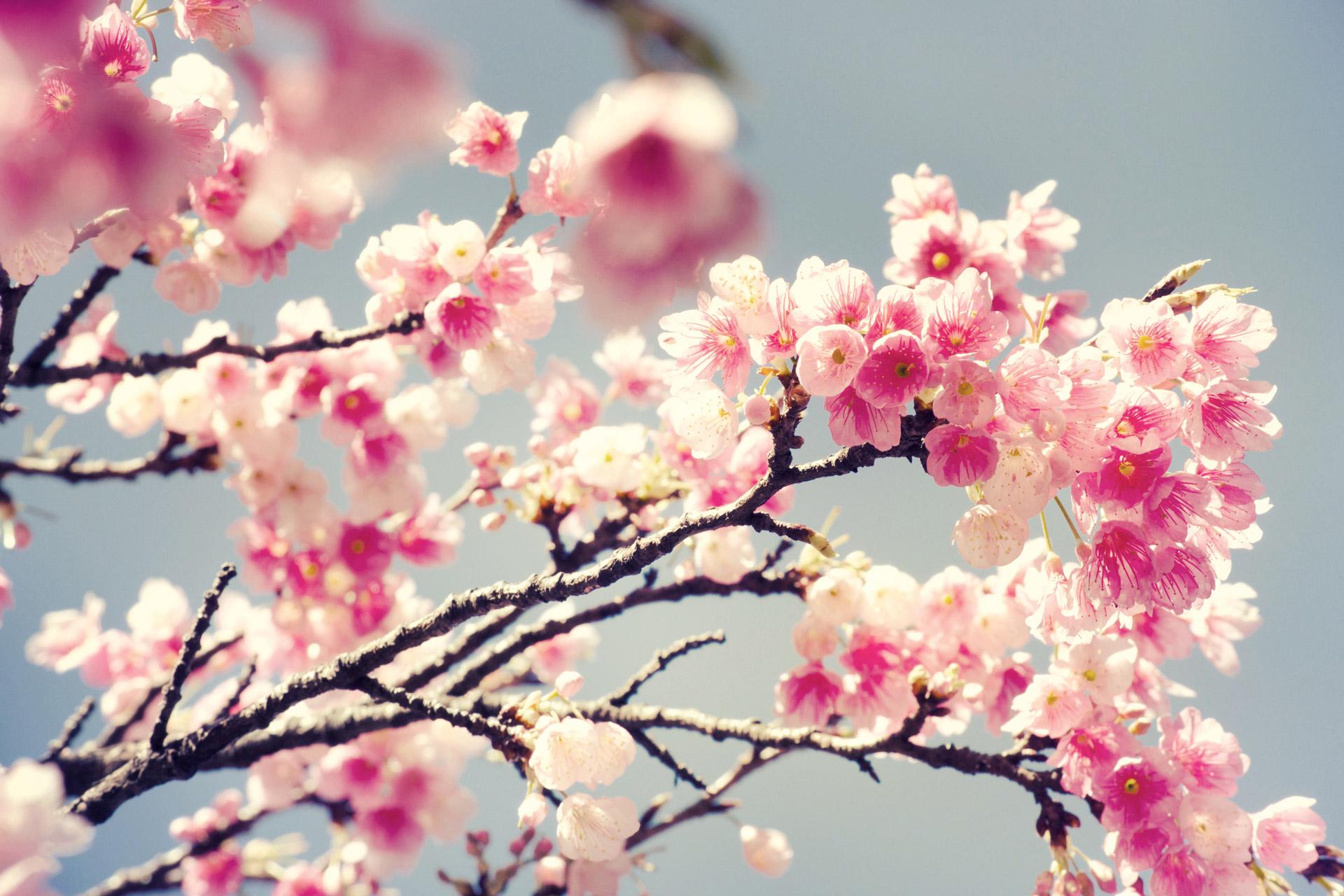 Как да си направим пролетен аюрведичен детокс?