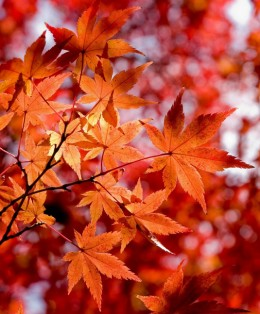 Аюрведа през есента