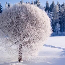 Аюрведа през зимата