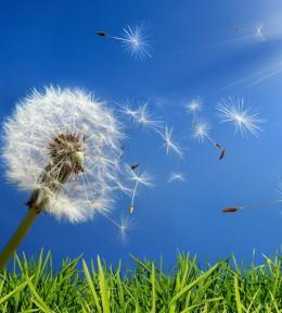 Алергиите и аюрведичната гледна точка за тяхното третиране